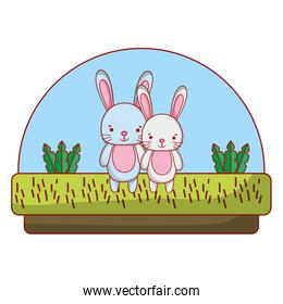 couple rabbit cute animal in the countryside