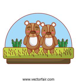 cute couple bear animal in the countryside