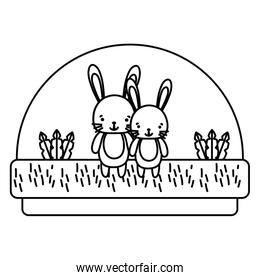line couple rabbit cute animal in the countryside