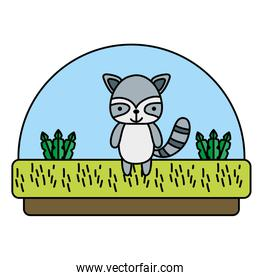 color raccoon cute animal in the countryside and plants