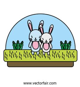 color couple rabbit cute animal in the countryside