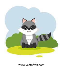 cute raccon wild animal in the landscape