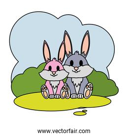 color couple rabbit wild animal in the landscape