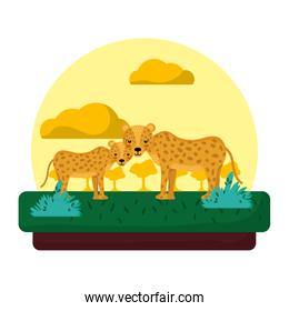 adorable leopard couple animal in the landscape