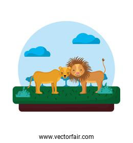 adorable lion couple animal in the landscape