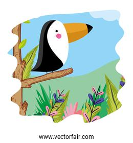 adorable toucan bird animal in the forest