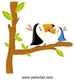 adorable toucan couple animal in the tree branch