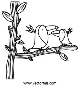 line adorable toucan couple animal in the tree branch