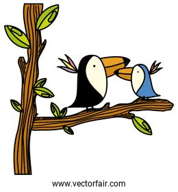 color adorable toucan couple animal in the tree branch