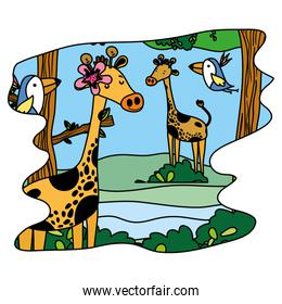 color nice giraffes and birds wild animal in the forest