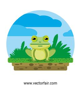 cute frog wild animal in the landscape