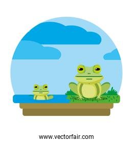 cute frog couple wild animal in the landscape