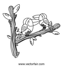 line cute bird couple animal in the branches leaves