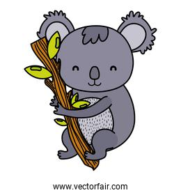 color cute koala wild animal in the branch leaves