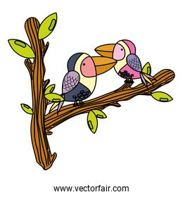 color cute bird couple animal in the branches leaves