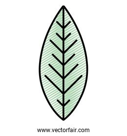 doodle cute exotic leaf tropical style