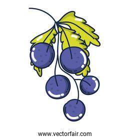 delicious grapes organic fruit with leaves