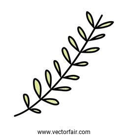 doodle natural plant exotic branch leaves