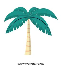 exotic palm with tropical tree leaves