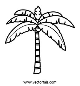 line tropical palm tree with leaves and coconuts