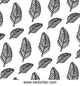 line tropical plan branch leaves background