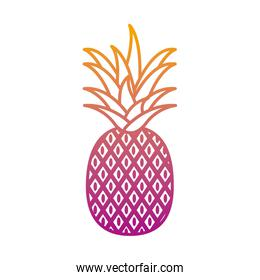 degraded line delicious pineapple organic fruit nutrition