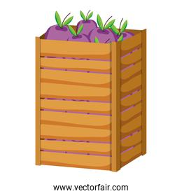 eggplants vegetables inside big wood box