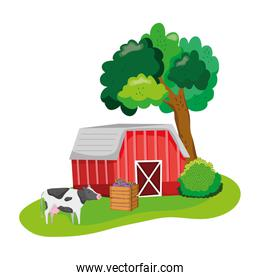 house farm with cow animals and eggplants