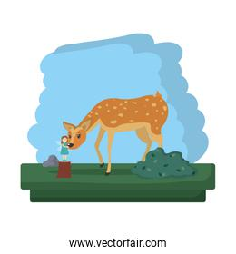 deer animal and fairy to forest reserve