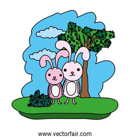 color couple rabbit cute animal in the forest