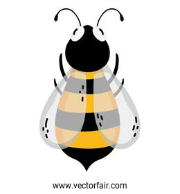 cute bee natural insect animal