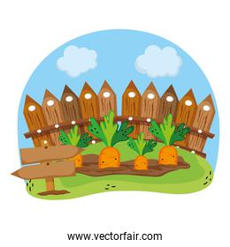 wood grillage and carrots farm cultivated