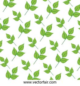 exotic plant nature leaves background