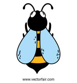 color cute bee natural insect animal