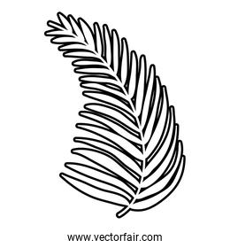 line tropical palm branch leaves plant