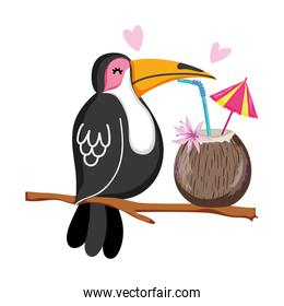 exotic bird with tropical coconut beverage