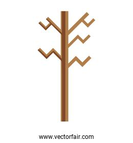 exotic wood nature stalk branch