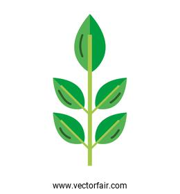 exotic nice plant leaves style