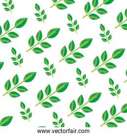 exotic nice plant leaves background