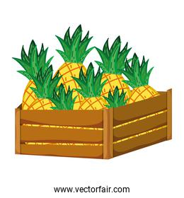 delicious pineapples fruits inside wood basket