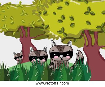 Cute raccoons cartoons