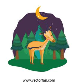 cute deer in the landscape on the night