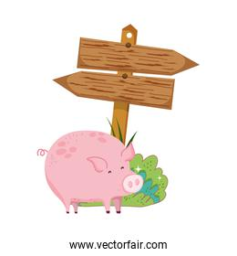 garden with wooden arrow signal and pig