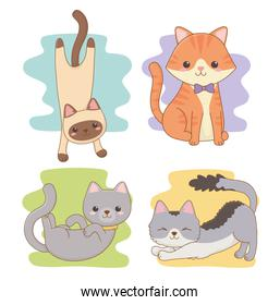 cute little cats mascots characters