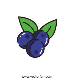 Isolated blueberries icon fill vector design