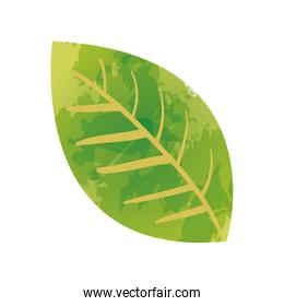 green leaf watercolor paint