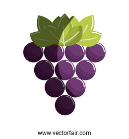 grapes fruit icon image