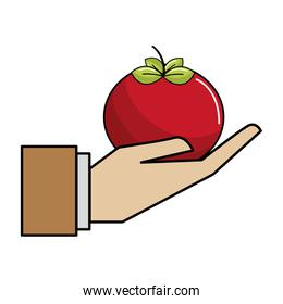 organic tomato vegetable in the hand icon