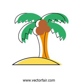 palm tree with coconuts and leaves