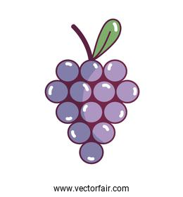delicious grape fruit with vitamins and protein
